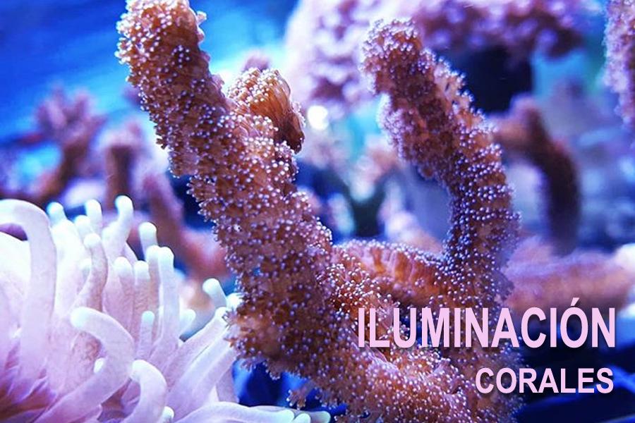 Iluminación corales