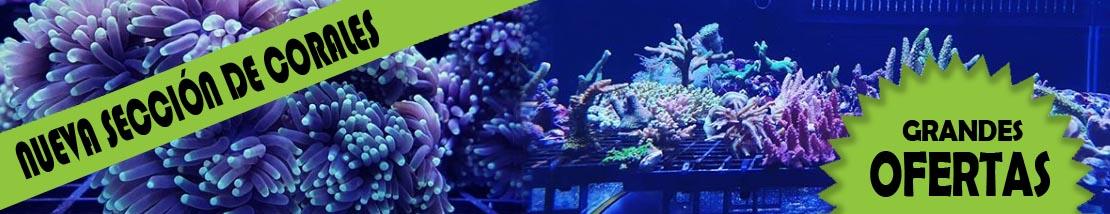 Seccion de la tienda relacionada con corales